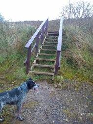 Dolly & steps