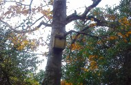 Nesting boxes - we spotted a few of these in various places. Well done Coillte!