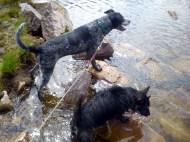Dolly & Alfie at Bay Lough