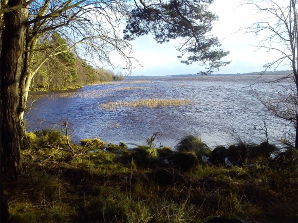 Fowlers Island, Lough Derg Relative calm on the lee side of the point