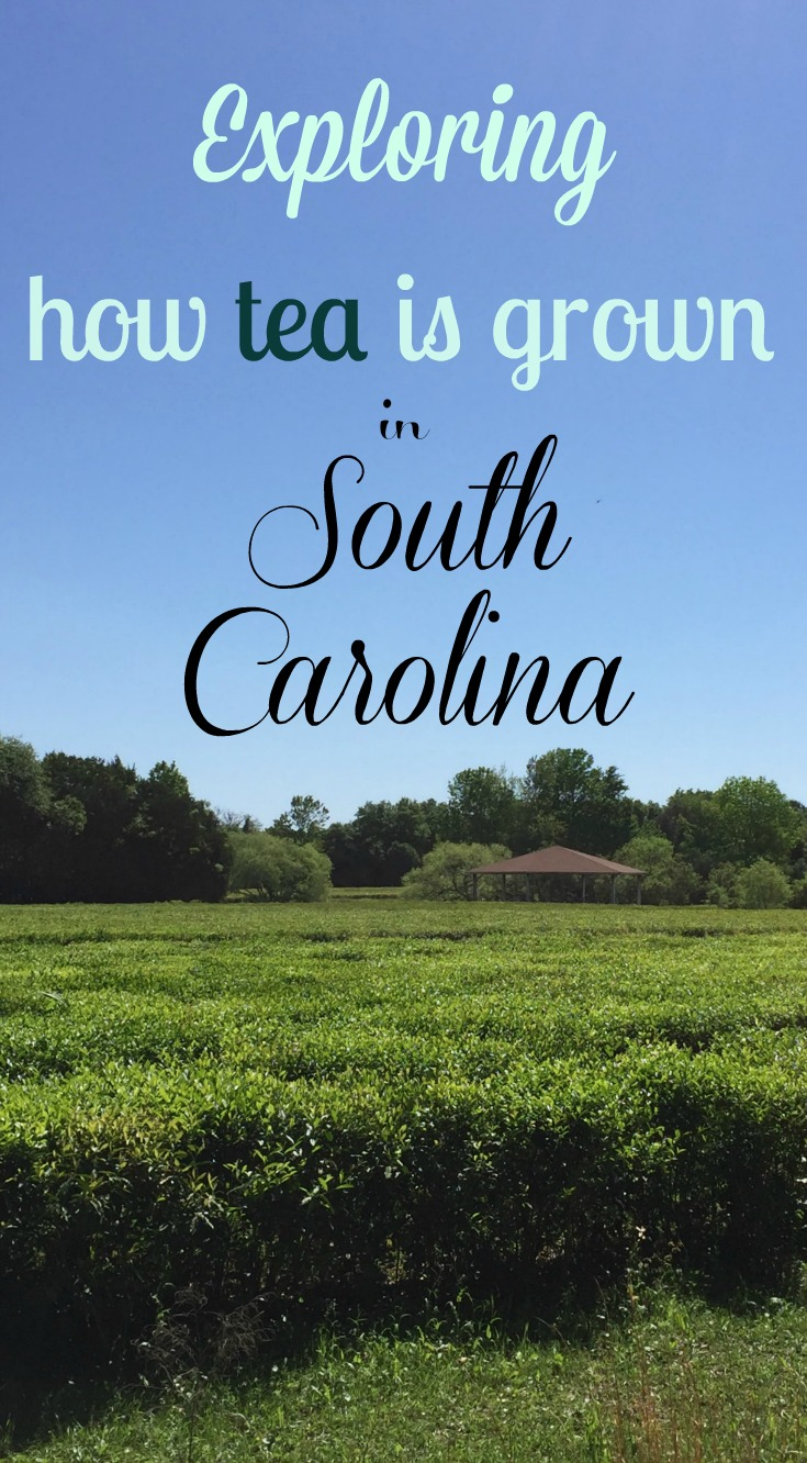 Charleston South Carolina Road Trip Southern Charm With