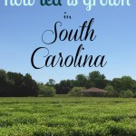 Charleston, South Carolina Road Trip: Southern Charm with a Side of Slave Tours and Tea