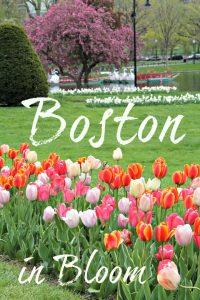 Boston in Bloom: Boston Public Gardens, Trinity Church and Beacon Hill