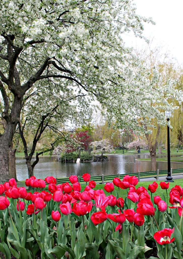 The popping colors of Boston Public Garden in spring.