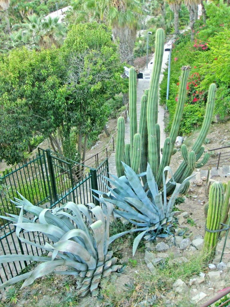 Cactus Garden in Barcelona, Spain. thedailyadventuresofme.com
