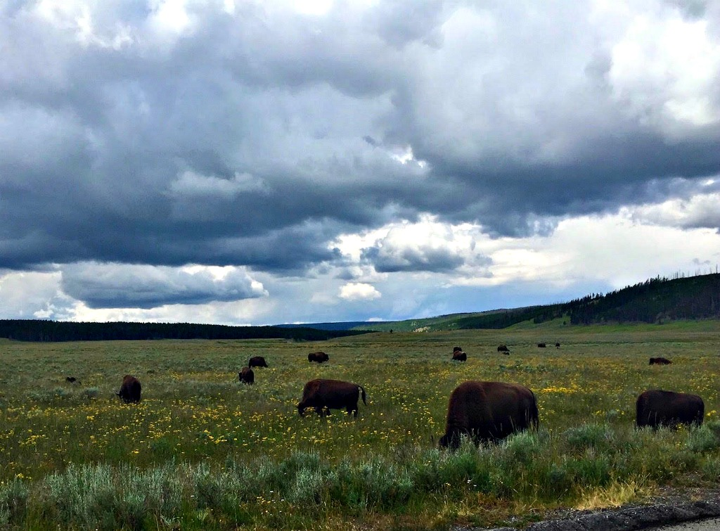 Fall is the best time to visit Yellowstone National Park