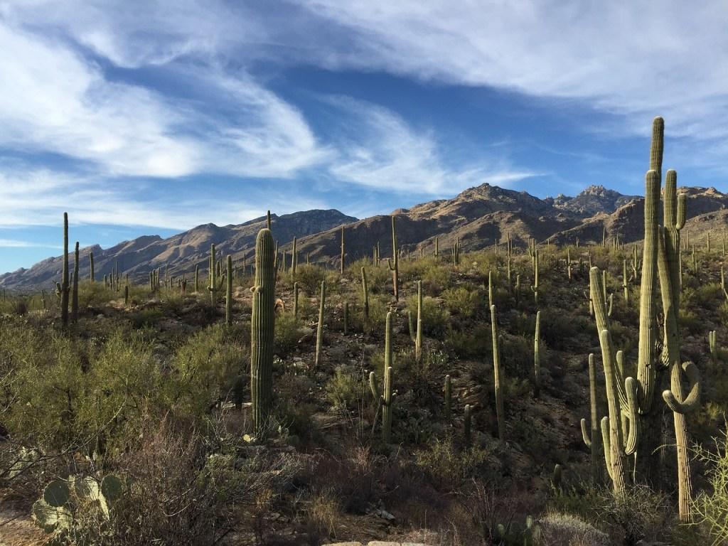 Saguaro National Park National Park