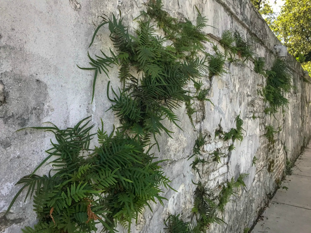 Walls of the Lafayette cemetery #1