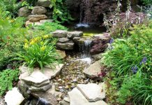 Tips To Maintain Your Backyard Pond Water Features