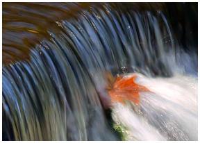 water_leaf_med_over