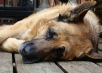 Best Dog Bed For Big Dogs & Large Dogs: Top 5 Buyer Tips