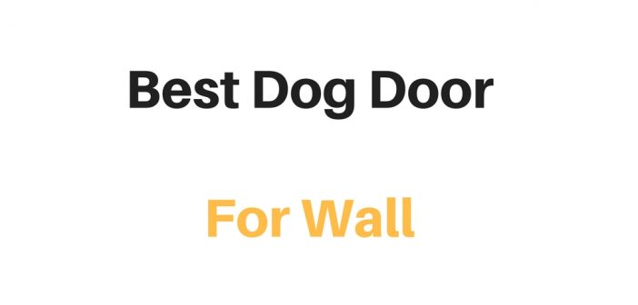 Best Dog Door For Wall (Through Wall Dog Door): Reviews