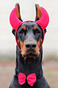 Cute and Slightly Evil Devil Costumes For Dogs