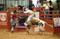 Rider Dog Costumes: Cowboy Rodeo, Bull Rider, Jockey + More