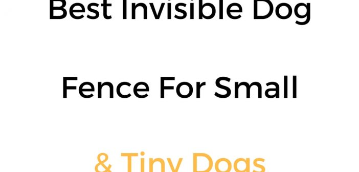 Best Invisible Fence For Small Dogs: In Ground & Wireless