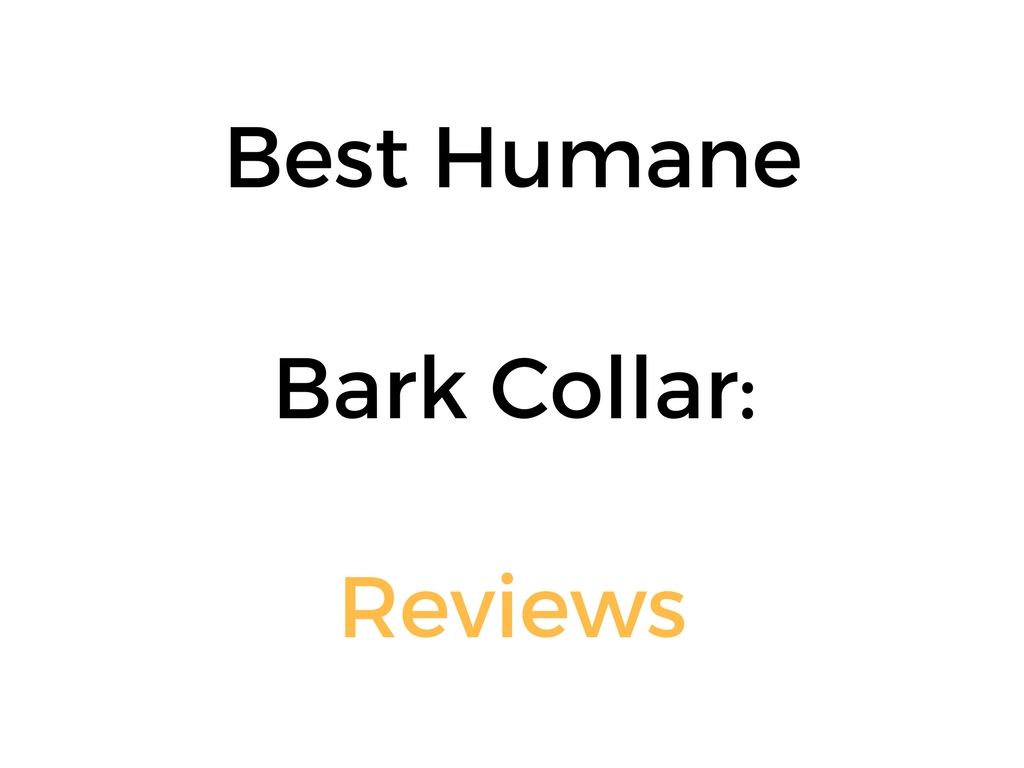 Best Humane Bark Collar For Dogs