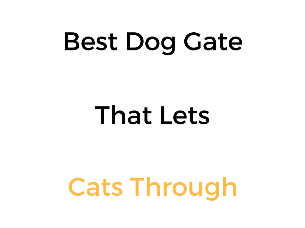 Best Dog Gate That Lets Cats Through