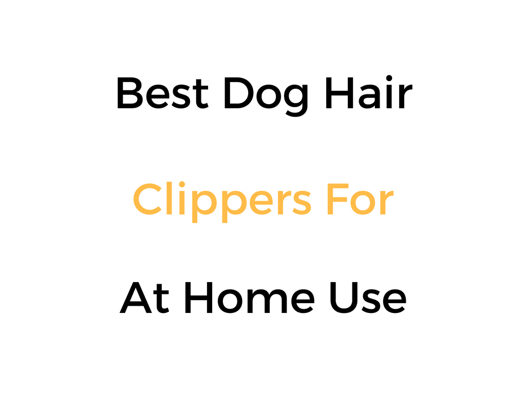 Best Dog Hair Clippers For At Home Use
