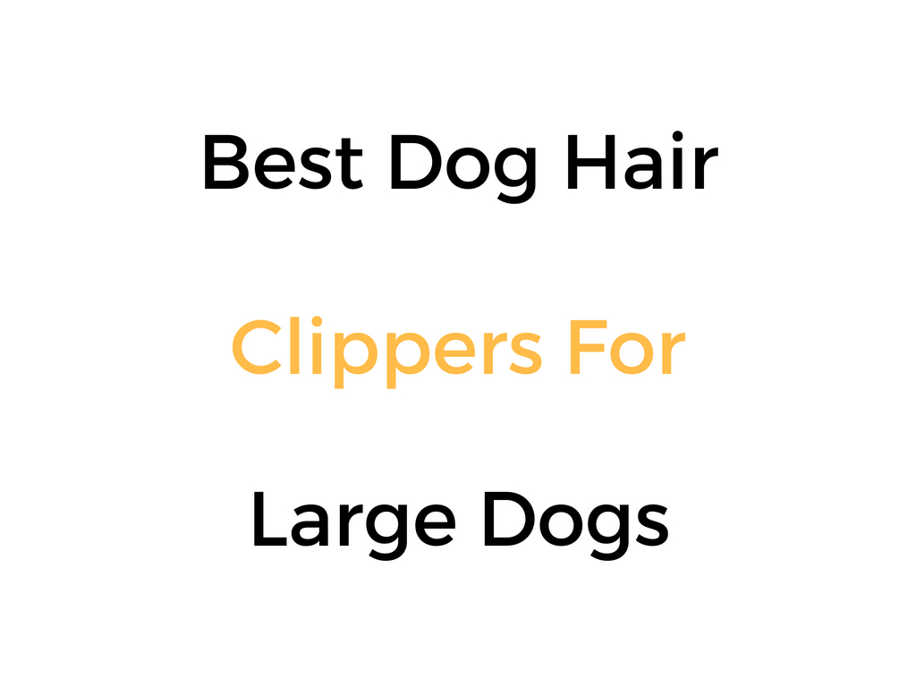 Best Dog Hair Clippers For Large Dogs