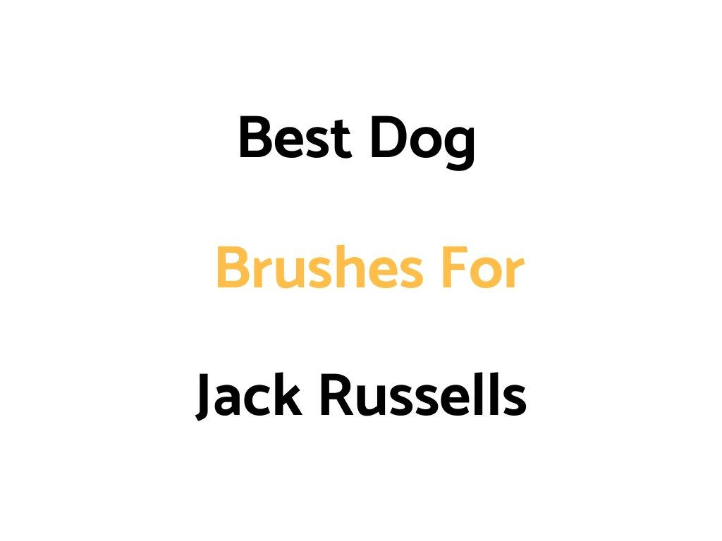 Best Dog Brushes For Jack Russell Terriers