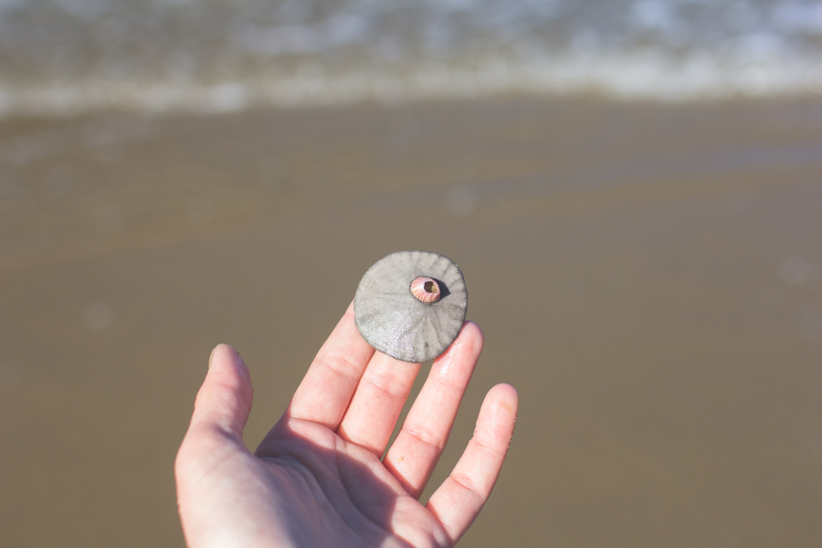 beachcombing, sand dollar