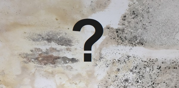 what causes damp on internal walls