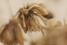 With extension tube