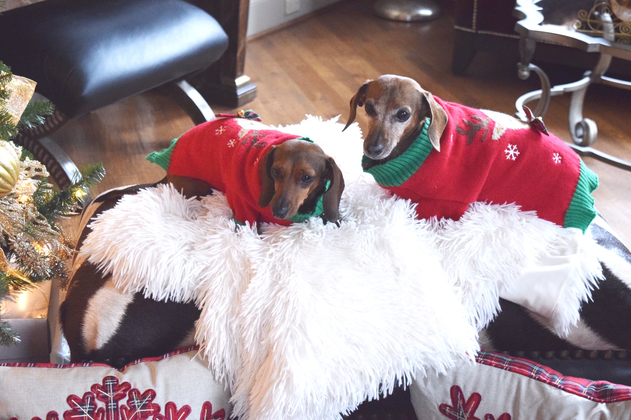 Holiday Dog Sweaters | The Darling Petite Diva