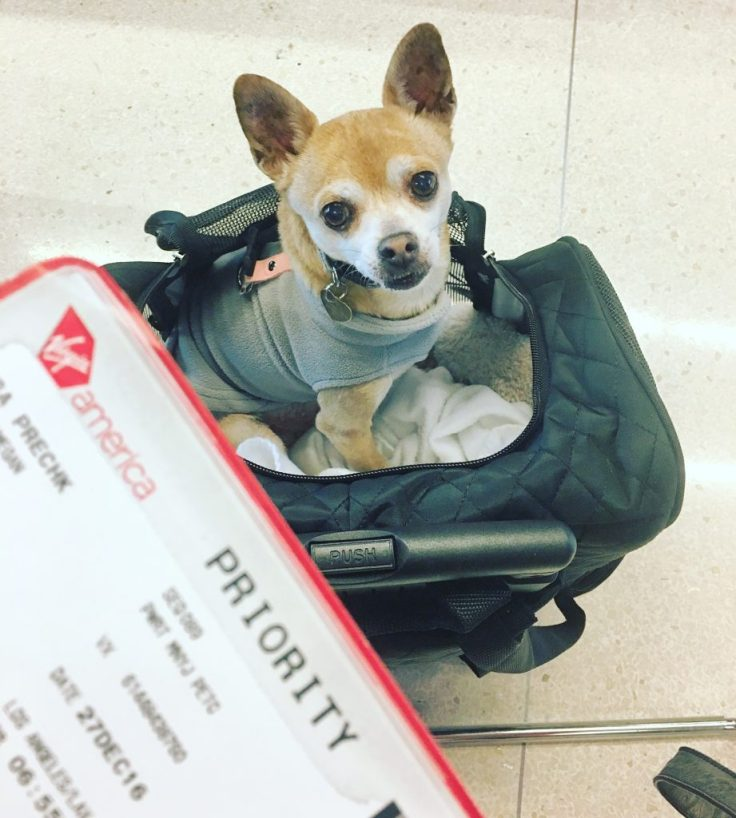 the best travel pet carrier ever