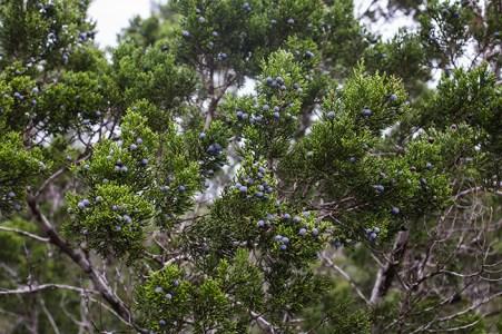 friedrich wilderness park san antonio-29 small