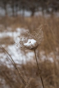 winter walk-20 small