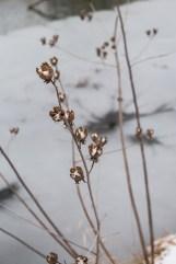 winter walk-7 small