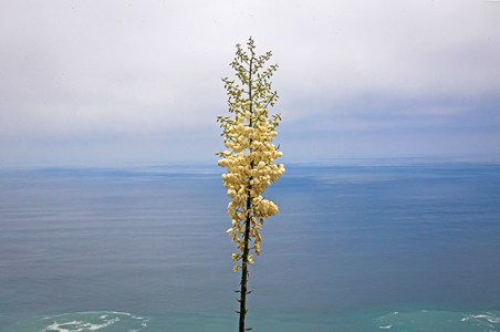 chaparral yucca marine layer point mugu state park-2 small