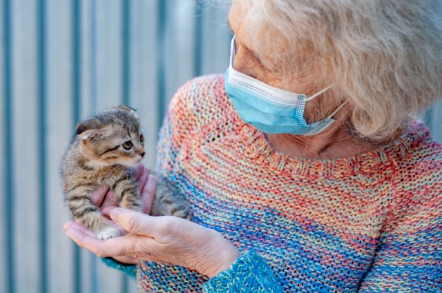 An older female volunteer in a mask holds a kitten at an animal shelter.
