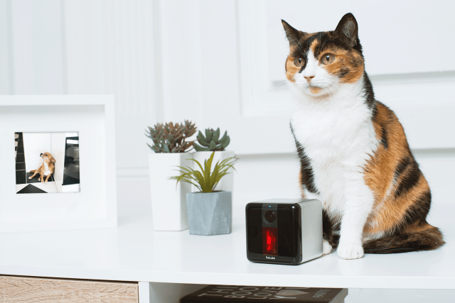 Camera-enabled pet feeder Petcube gains Alexa functions