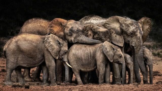 CEWE Photo Award draws more than 600,000 entries