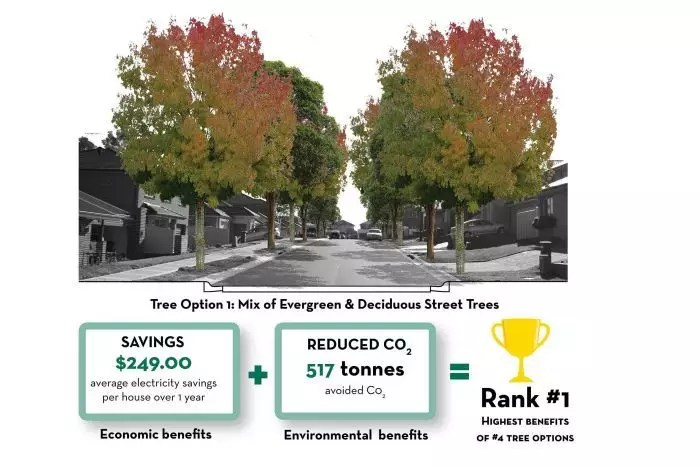 save money investing in your landscaping: trees reduces electric bills and CO2
