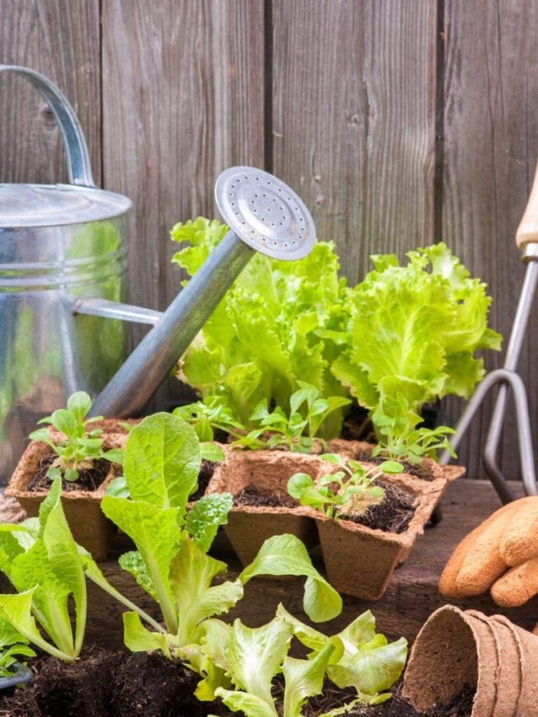 Zorg voor sfeer in de tuin