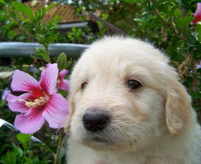 savannah and flower