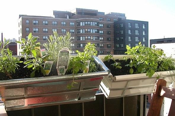 An urban herb garden.