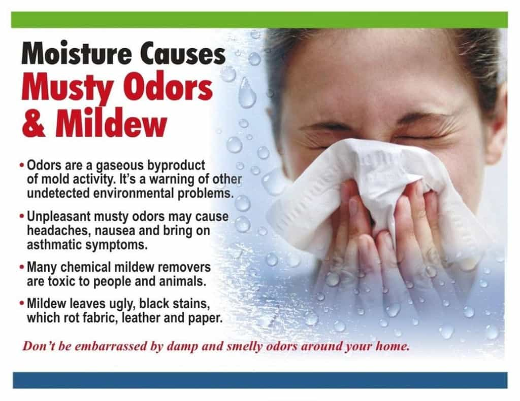 How to get rid of musty smell  TheDehumidifierExperts