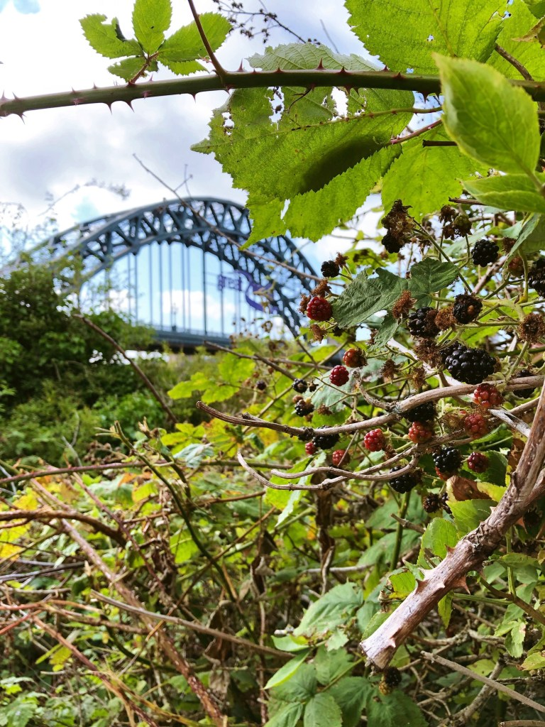Blackberry picking by the Tyne Bridge