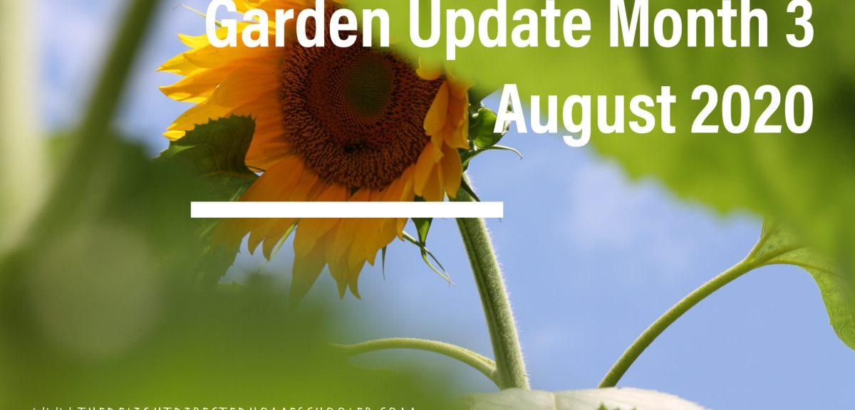 Garden Update Month 3- August 2020