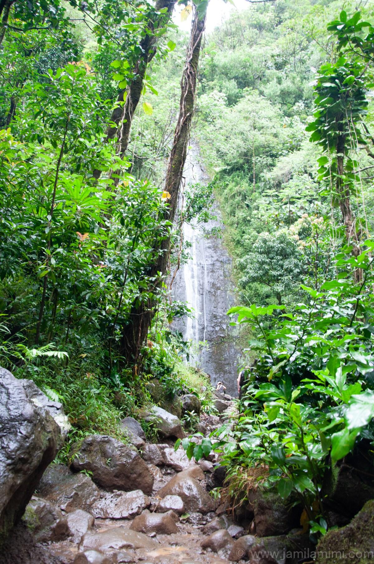My 3rd Hiking Adventure in Oahu: Manoa Falls Hiking Trail