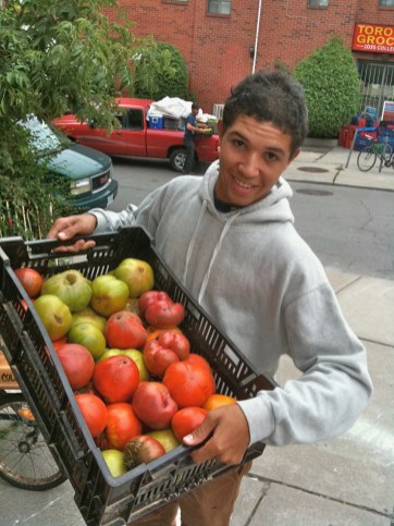 Gervais Nash bringing in a haul of organic tomatoes from Grant McPhereson's Pairie Boy Farm