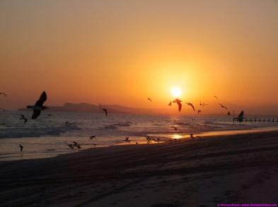Birds at the beach at sunset - Salalah - 21.12.14