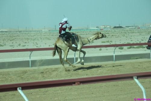 camel festival neil3