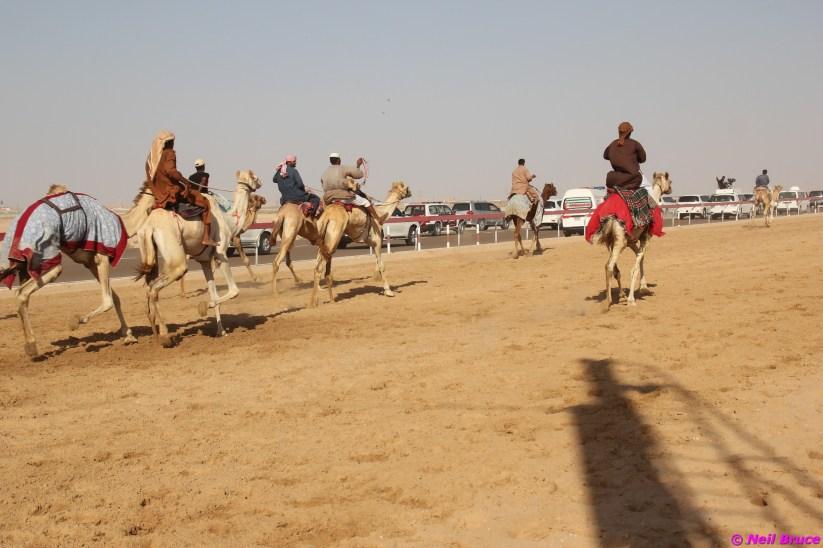 camel festival neil9