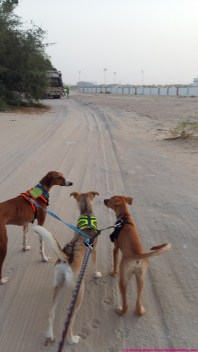 the three hounds seeing off the bin lorry