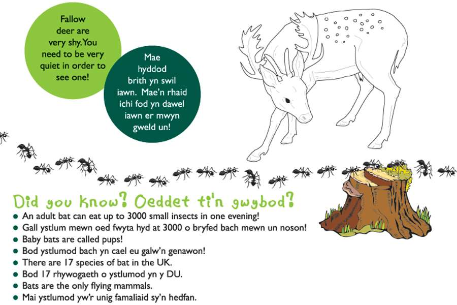 Deer Illustration for Interpretation panel, Somerset